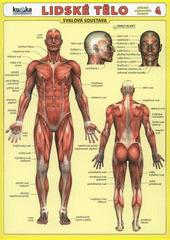 Lidské tělo - Přehled orgánových soustav - Svalová soustava CZ
